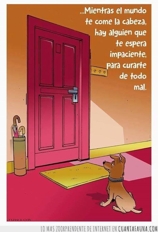 cabeza,casa,comerte,dibujo,divertir,esperar,llegar,mal,perro,puerta