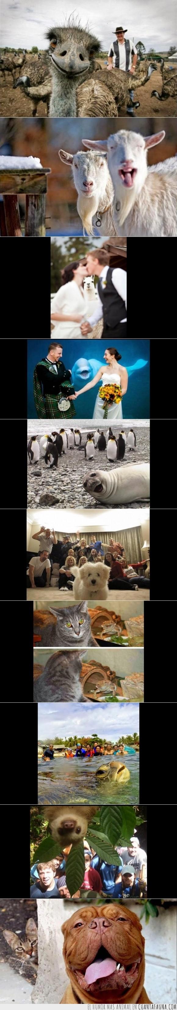 animales,Avestruz,divertidos,en algunos casos arreglan las fotos,estropear,foca,foto,gato,graciosos,inesperada,lagarto,oveja,perro,pingüino,tortuga perezoso