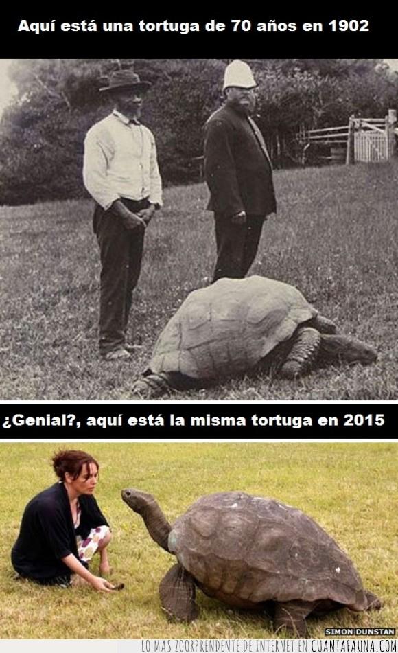eterna,longeva,longevidad,tiempo,tortuga,vida,vieja,vivir