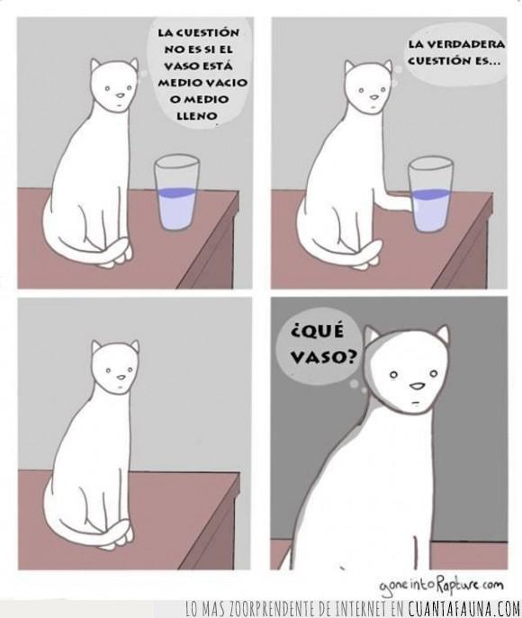 agua,blanco,filosofia,filosófico,gato,mesa,tirar,vaso