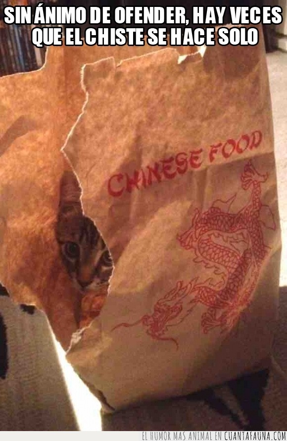 bolsa,china,chino,chiste que se hace solo,cocinado,comida,crudo,gato,llevar