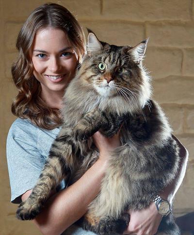 27096 - Algunos de los gatos más grandes del mundo