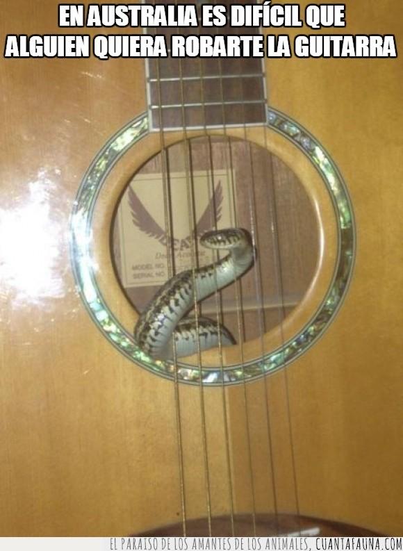 Australia,caja,cuerdas,dentro,guitarra,miedo,serpiente,tocar