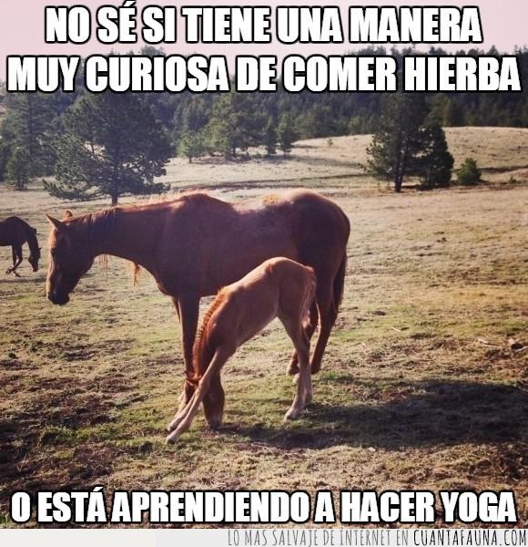 aprender,caballo,comer,doblar,joven,potrillo,rodillas