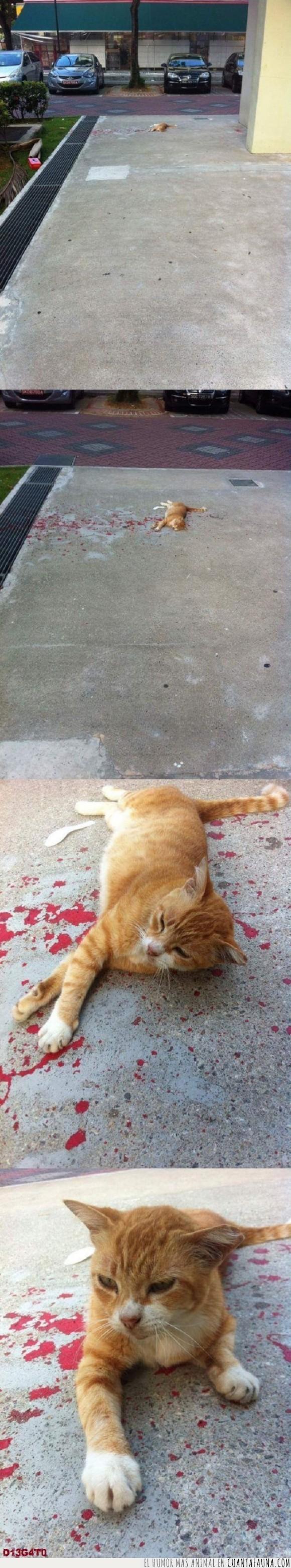 animal muerto,gato,perspectiva,pintura,sangre,solo pintura,susto