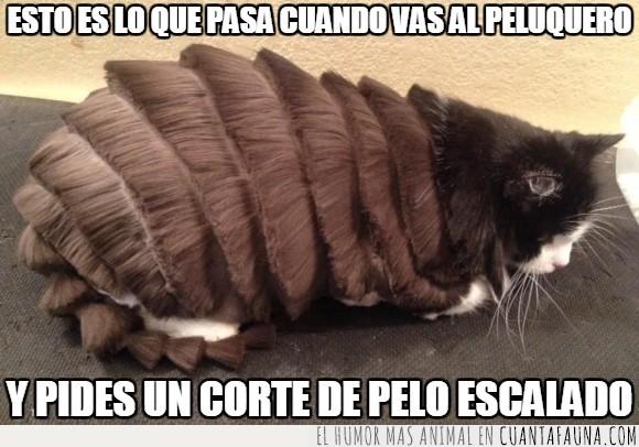 corte,estética,felino,gato,humor,mascota,peinado,pelo,peluquería