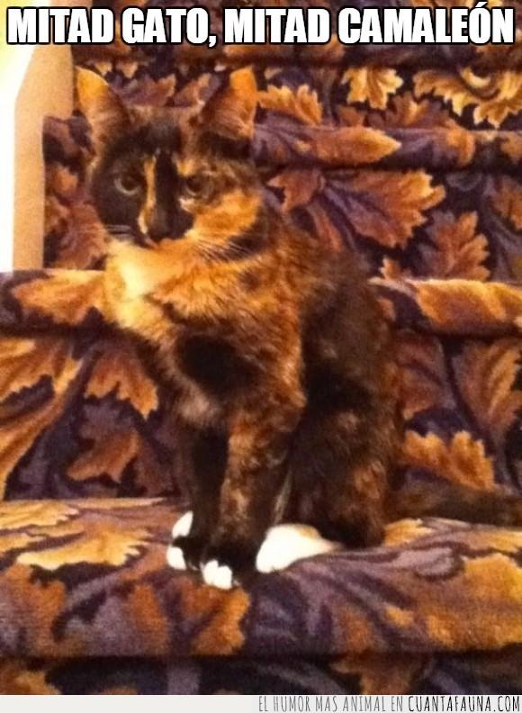alfombra,color,escalera,escalon,estampado,gato,hoja,igual,mancha,maqueta,marca