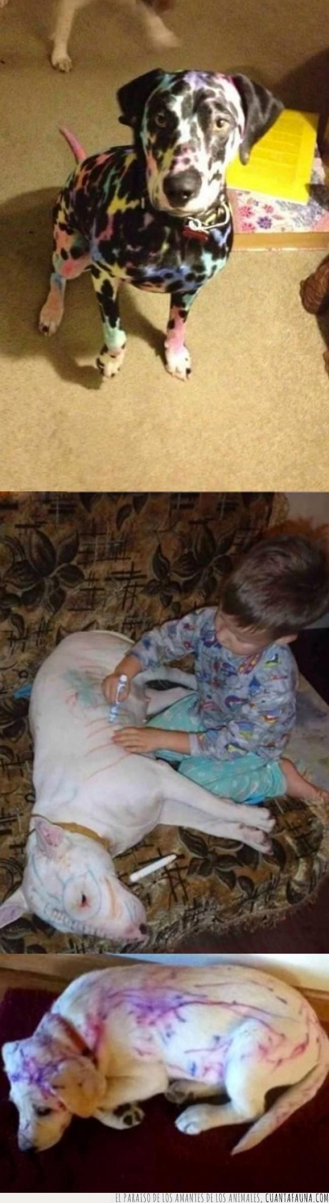 color,liar,manchar,niño,pequeño,permanente,perro,pintar,rotulador