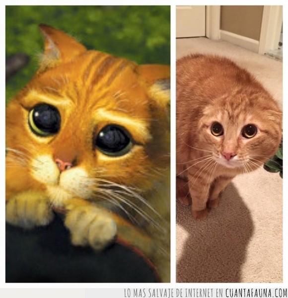 felino,gato,gato con botas,ojitos,ojos,película,shrek
