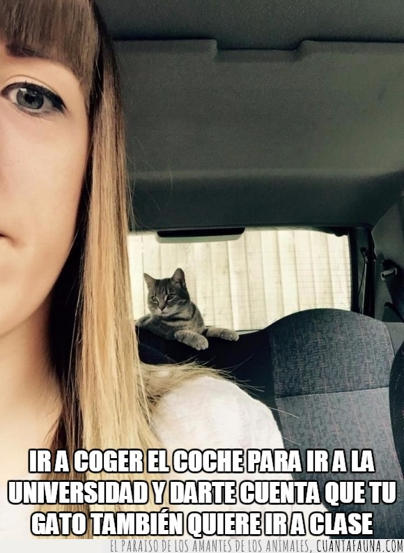 automóvil,chica,coche,colar,felino,Gato,intruso,invitado,polizón,sorpresa