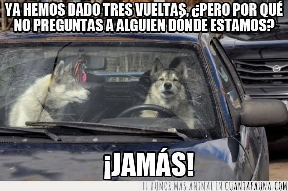 atajo,camino,coche,conducir,corto,husky,perdido,perro,preguntar
