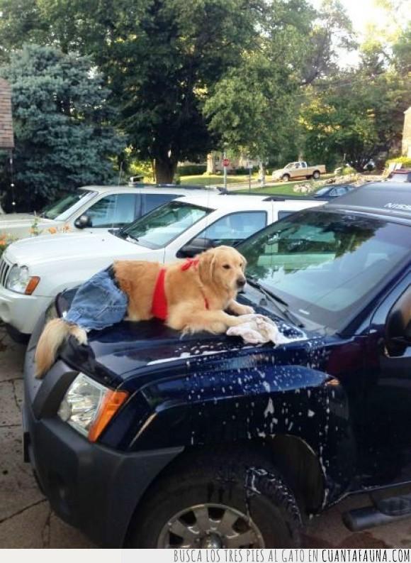 bañador,carwash,coche,espuma,jabon,labrador,lavar,peliculas americanas,perro