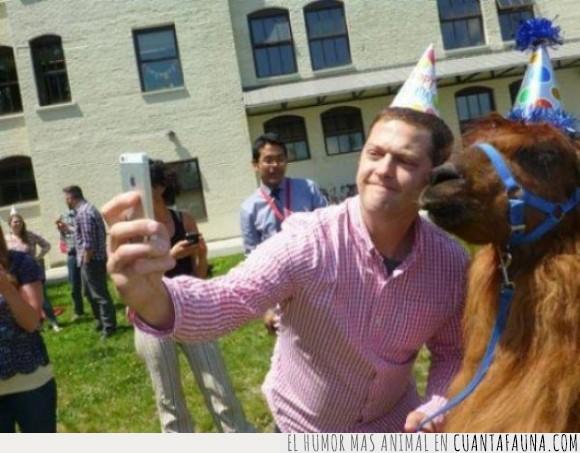 alpaca,animal,fiesta,foto,gorrito,iphone,llama,marron,no lo tengo muy claro,party,selfie