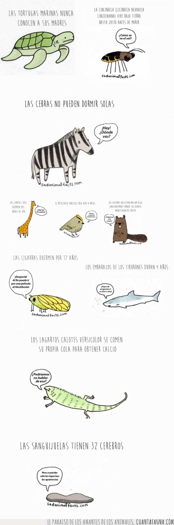 animales,babosa,castor,complejos,cosas,jirafa,lagartija,luciernaga,tiburon,tortuga,un pajarito,una jodida cebra