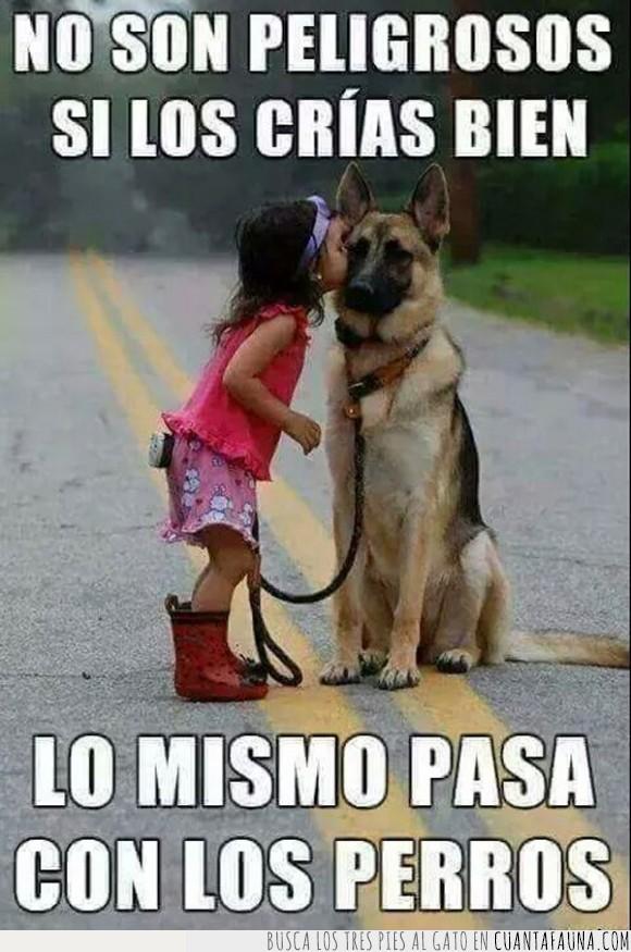 Educación,niños,peligrosos,perros,responsabilidad de los dueños,responsabilidad de los padres