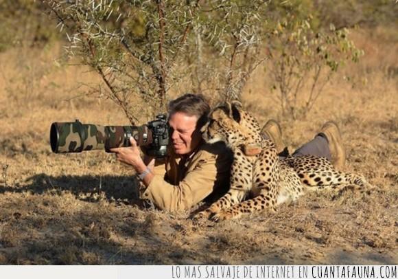 asustar,consejo,foto,fotografo,guepardo,lado,leopardo,mirar,obturador,sabana,tómbola