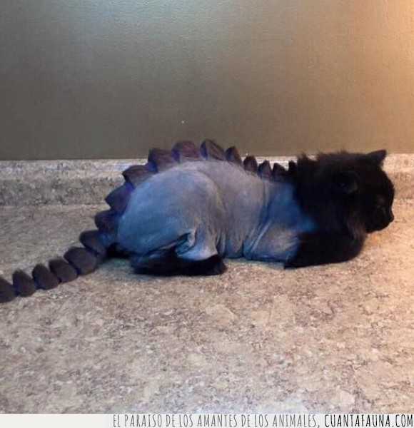 corte,dinosaurios,felinos,Gato,humor,Jurassic Park,Jurassic World,pelaje,pelo