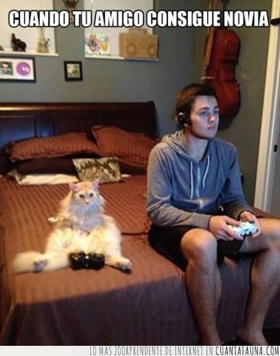 amigo,conseguir,echarse novia,Gabrieth,gato,videojuegos