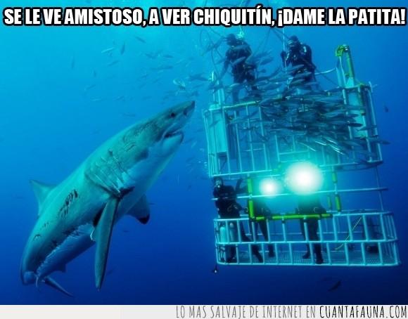 buzos,gigante,humor,Jaula,mar,océano,religión,salir de la jaula,tiburón,tiburón blanco,valientes