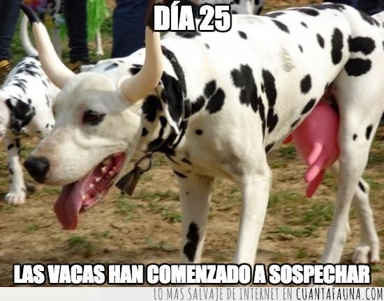 cuernos,Dalmata,Misión,Plan,Vaca