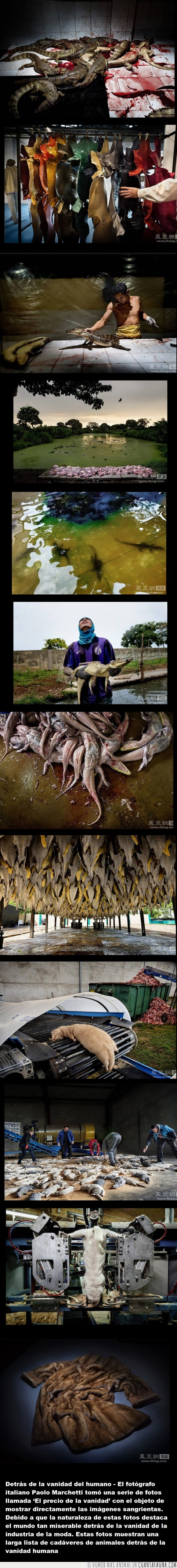 abrigo,animales,asesinato,bolso,casa,cocodrilo,crueldad,especies,muerte,piel,pieles