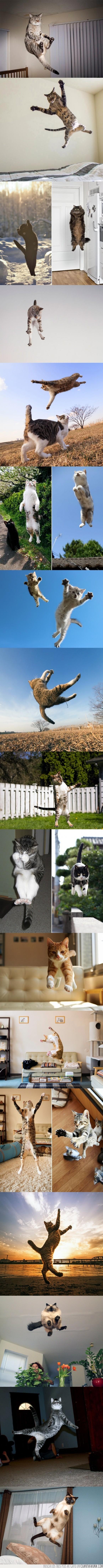 cielo,flotar,gato,gatos,gravedad,saltar,volar,volver