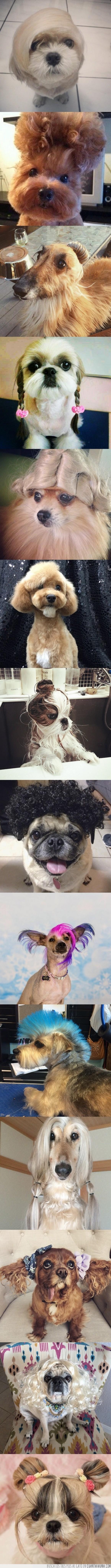 belleza animal,divertido,estilo,peinados,permanente,perro,rizos
