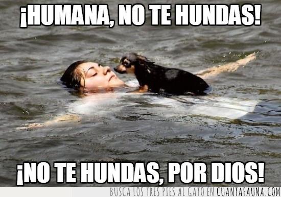 agua,flotar,hacerse el muerto,miedo en sus ojos,perro