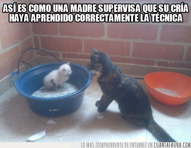 enseñando el uso del baño,gatos,hija adoptiva,nina y sara,perdon la calidad de la foto,yin-yang