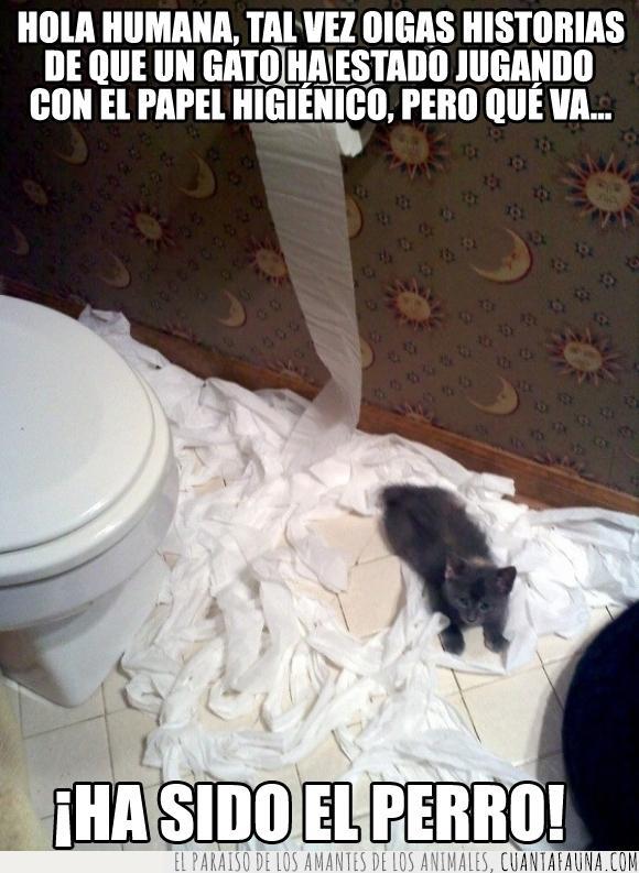 baño,cachorro,cria,gatito,Gato,higienico,lavabo,papel,pequeño,rollo,travesura