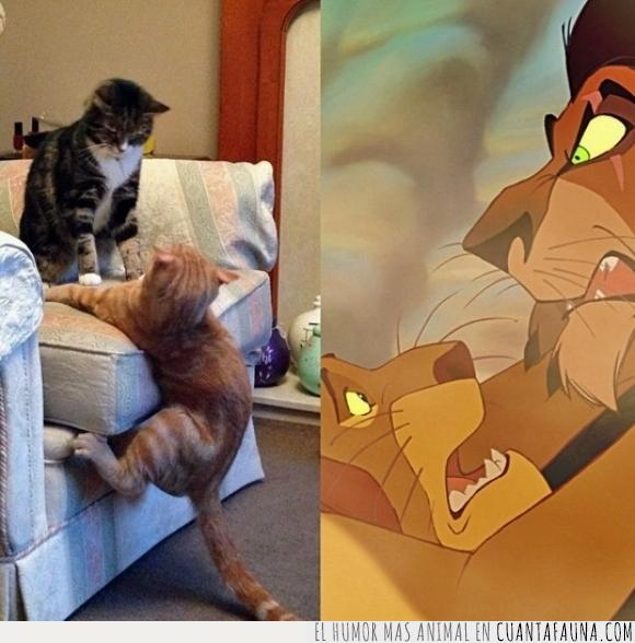 actuación,el rey león,escena,Gato,larga vida al rey,mufasa,parodia,scar
