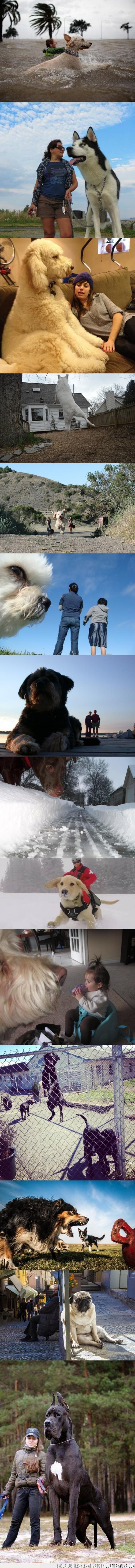 fotografías,gigantes,miedito,momento justo,perros,perspectiva,si fueran gatos estaríamos perdidos