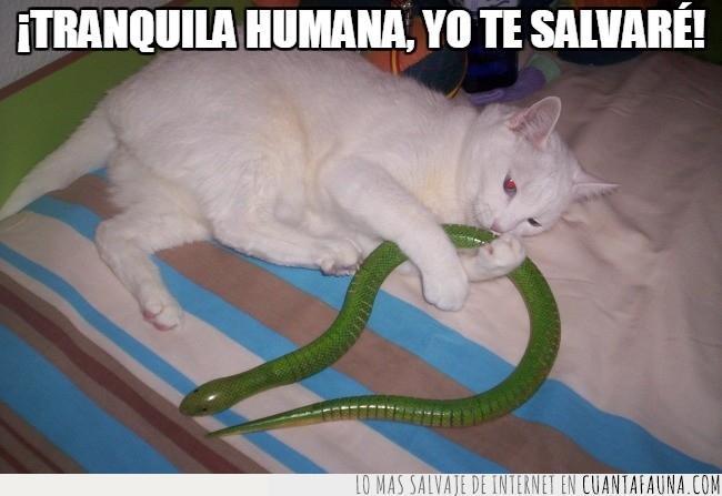 defender,gato,heroe,jugar,juguete,salvar,serpiente
