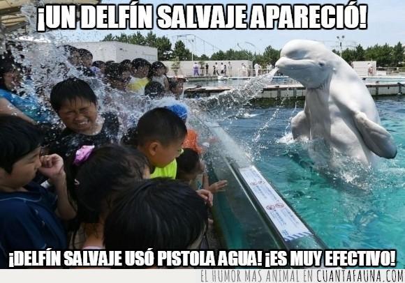 acuario,ballena,beluga,calor,chorro,Japon,mojar,niño,zoo