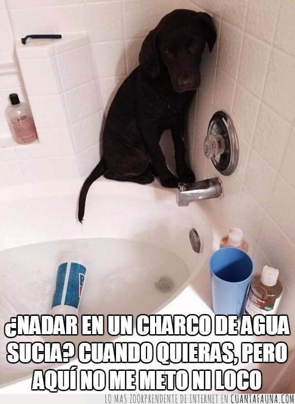 agua,bañar,bañera,baño,can,charco,ducha,esquina,lavar,limpiar,miedo,Perro,rincón