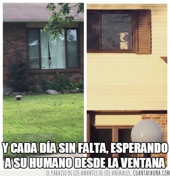 can,casa,espera,fidelidad,Perro,trabajo,ventana,volver