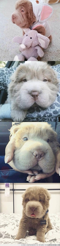 adorable,animal,cachorro,oso,peluche,peludo,Perro,tierno,Tonkey