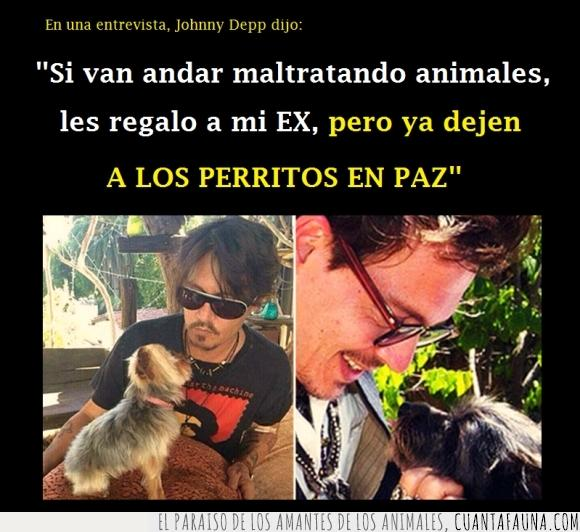 animal,ex,exmujer,exnovia,expareja,Johnny Depp,maltratar,maltrato,paz,perrito,seguro lo dejaron por un perro