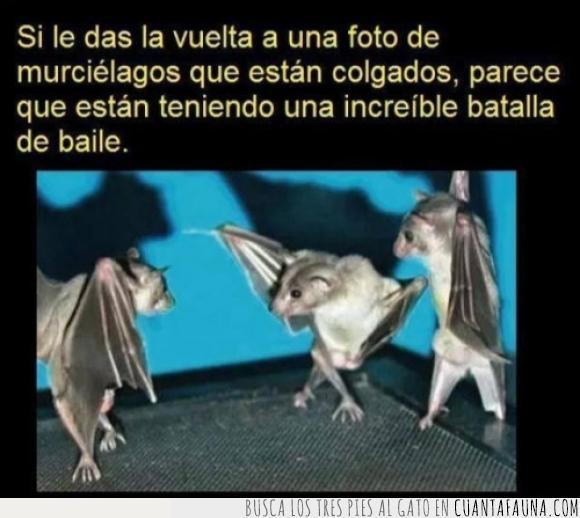 bailar,baile,breakdance,murciélagos,revés
