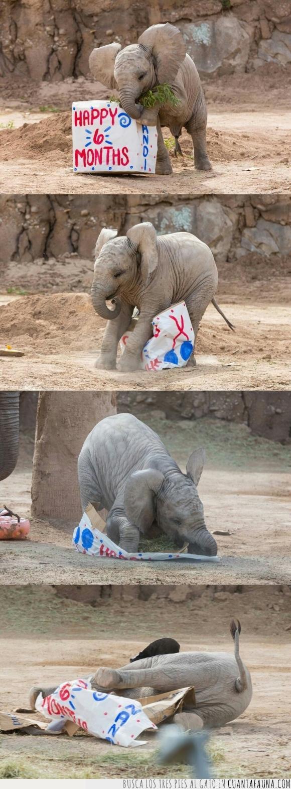 bebé,cumpleaños,elefante,tierno