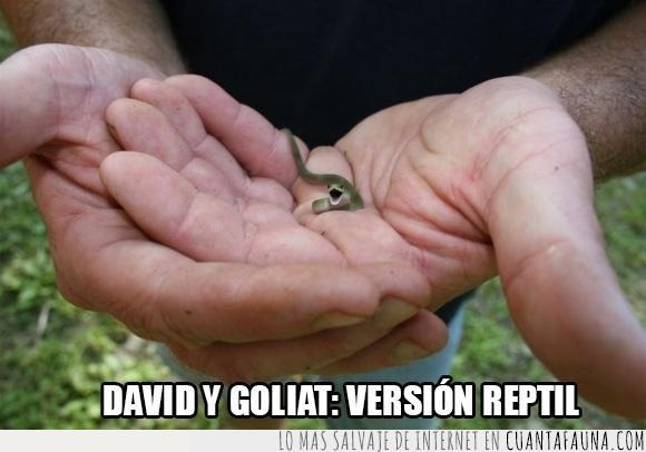 cría,diminuto,Lagartijas,lagarto,manos,pequeño,reptil,serpiente