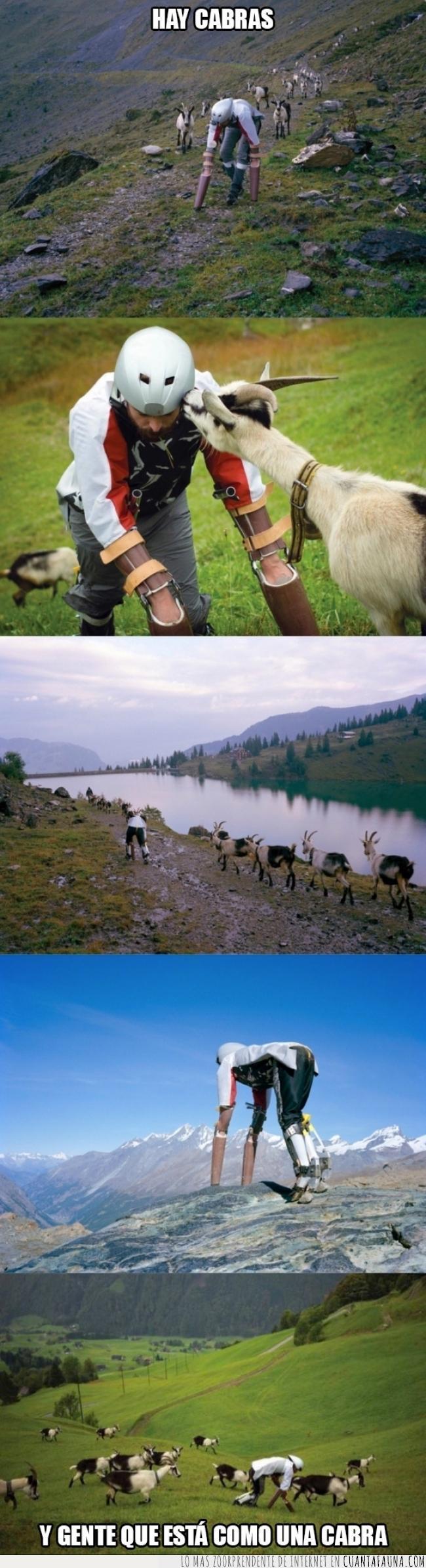 cabra,camuflaje,como una cabra,disfraz,ibuprofeno en vena,naturaleza