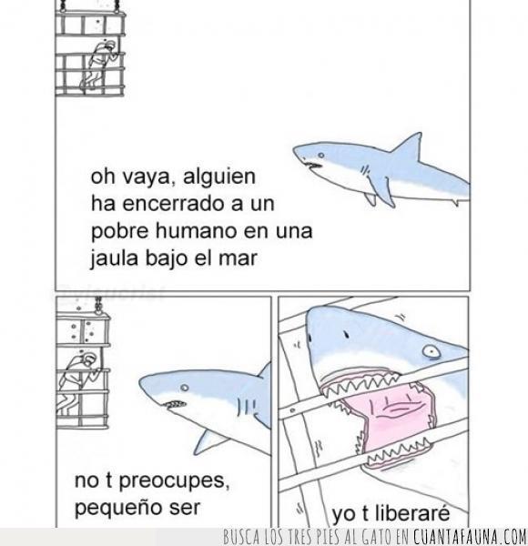 bajo el agua,humanos,mar,salvar,tiburones
