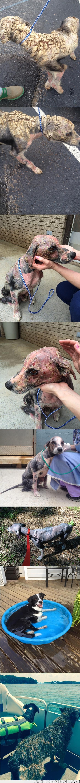 adoptar,perro,rescate,salvar una vida