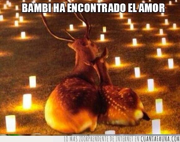 amor,ciervo,cuernos,enamorados,iluminación,jardín,pareja,romántico,velas,Venados