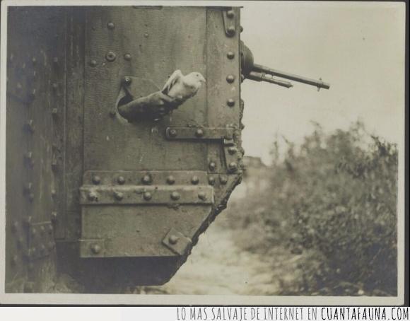 2gm,abuelo,guerra,mensajera,paloma,segunda guerra mundial,tanque,tweet