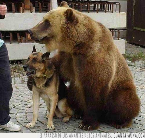 abrazo,animales,can,oso amistad,Perro,plantígrado
