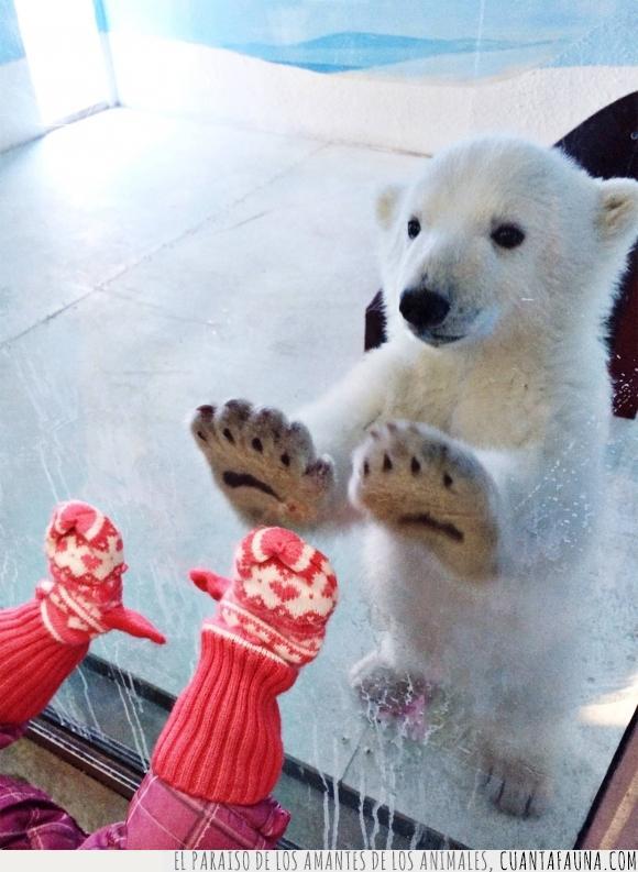 frio,guantes,niña,osezno,osito,oso,polar,zoo