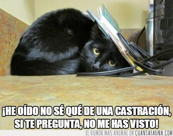 cable,castrar,debajo,esconder,gato,papel,veterinario