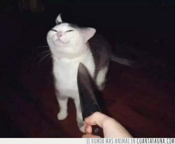 amenazar,asustar,cuchillo,gato,miedo,mirada,mirar,sonrisa,susto